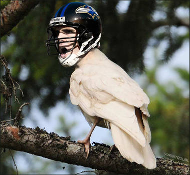 NFL - Flacco Albino Raven