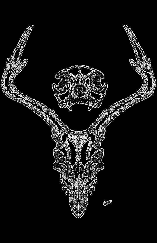 Deerskull by AnneWolfsRain