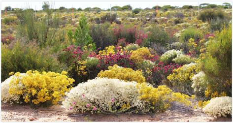 Wildflower Season by WestOz64
