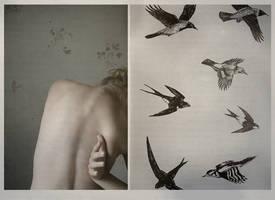 Wings. by froststick