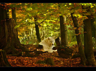 Wolf by rad-ix