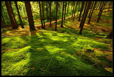The Moss is Ever So Green by rad-ix