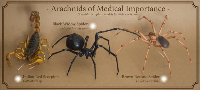 Arachnid Models - Medically Relevant Species