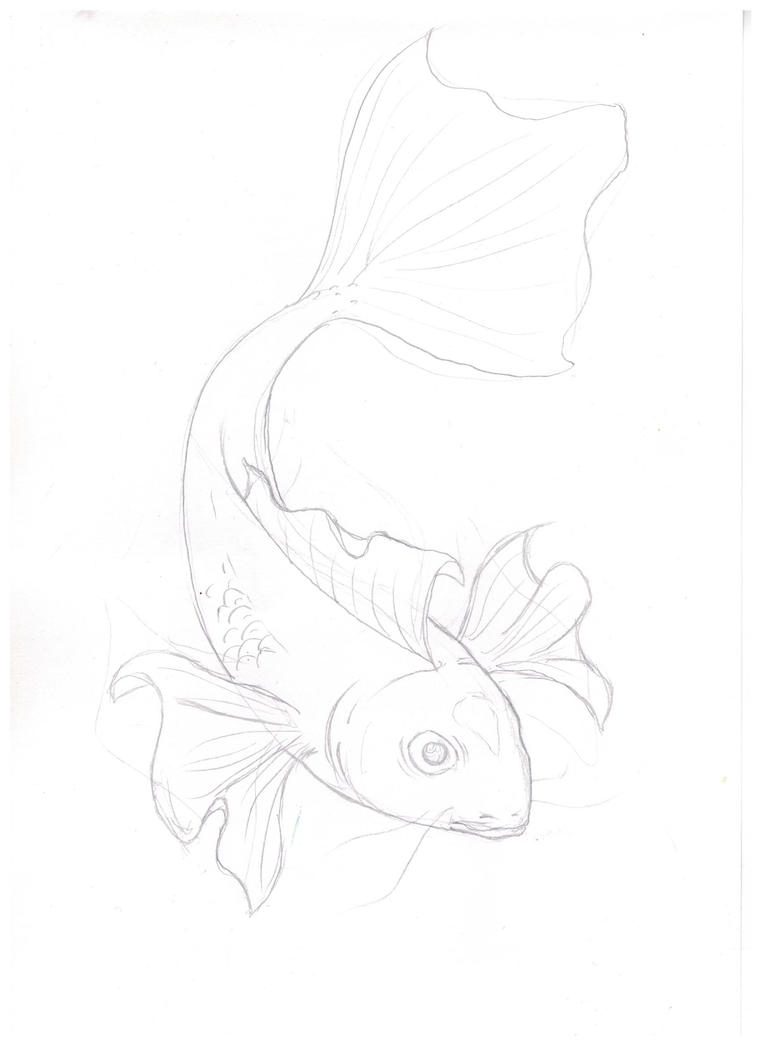 Koi sketch by lollollol2