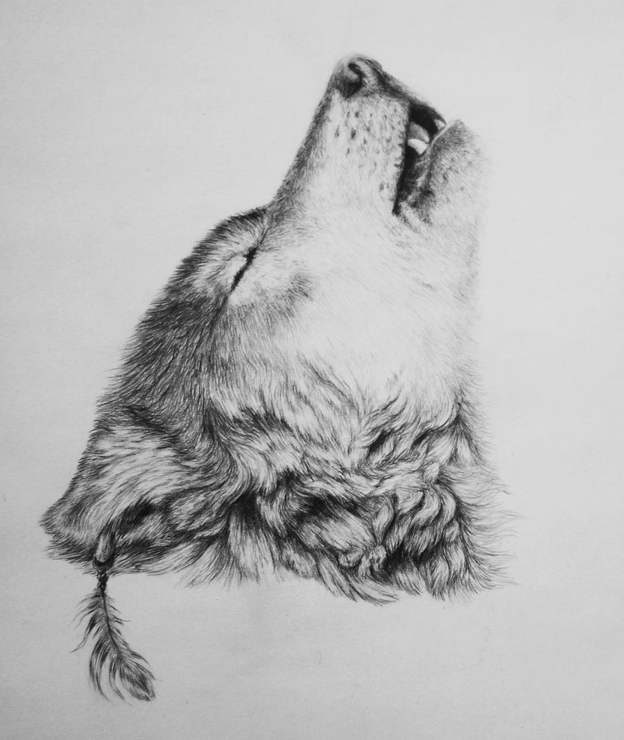 pencil drawings photos Wolf Drawings In Pencil