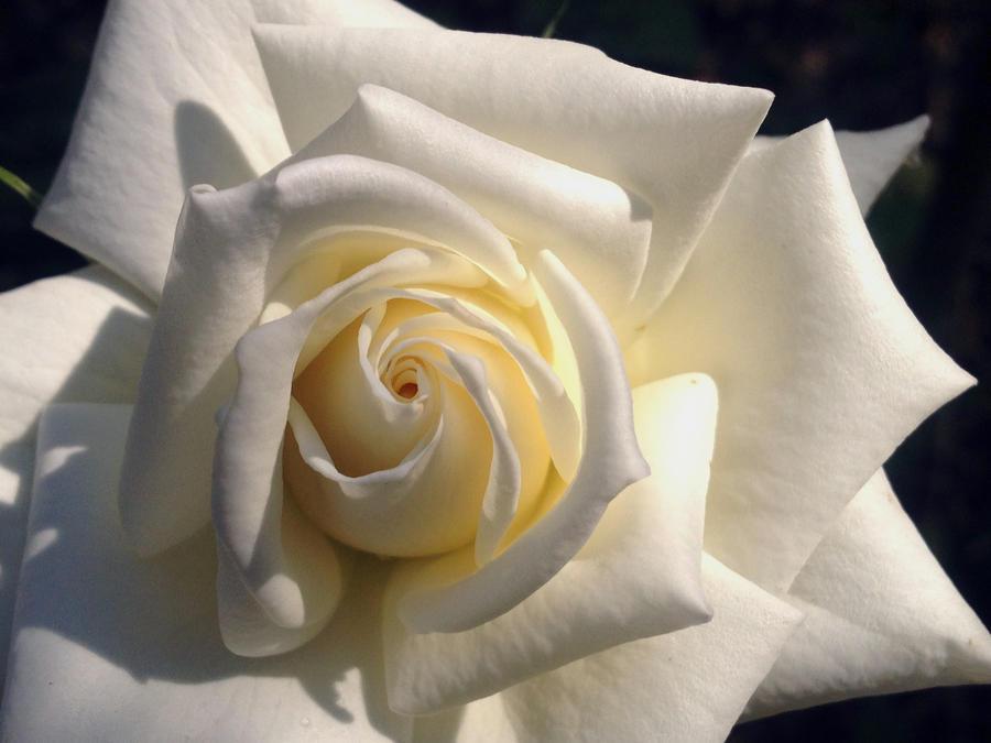 White by Sam-432
