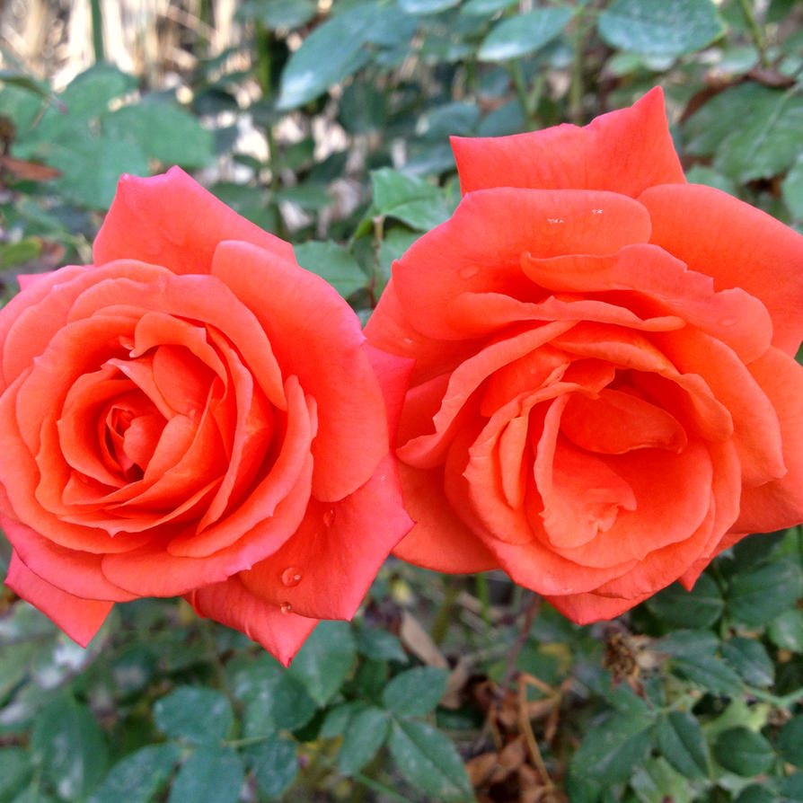 flower by Sam-432