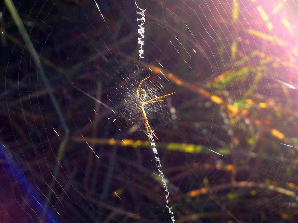 Spider by Sam-432