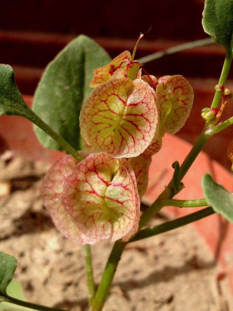 Herb strange as if blood vessels by Sam-432
