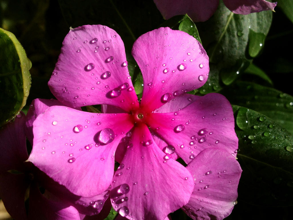 Pink by Sam-432
