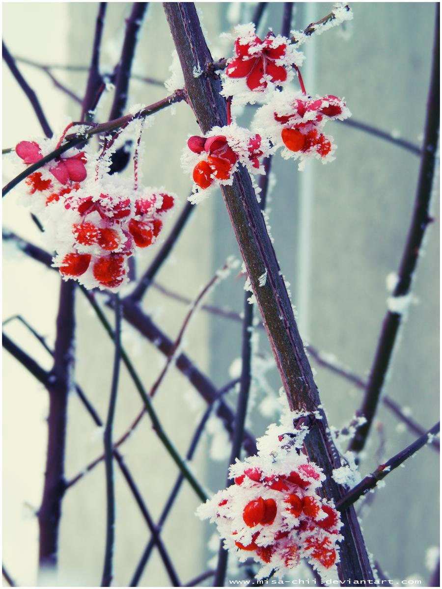 Crimson by Misa-chii