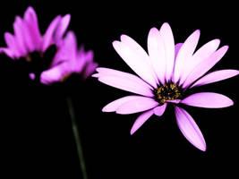 Purple flower by Catticat
