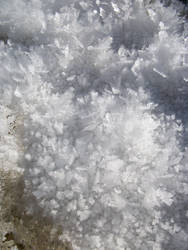 Frost Crystals by Indelibly-Yours