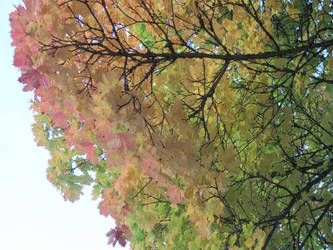 Autumn Leaves 1 by Indelibly-Yours