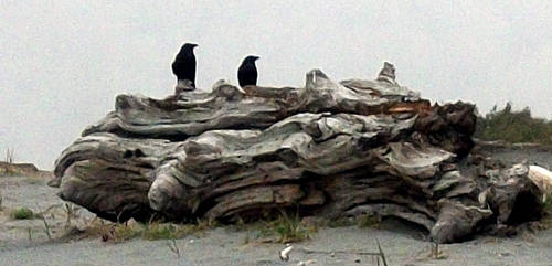 A Study of Driftwood by Indelibly-Yours