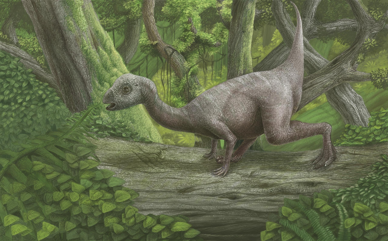 hypsilophodon by AshiRox