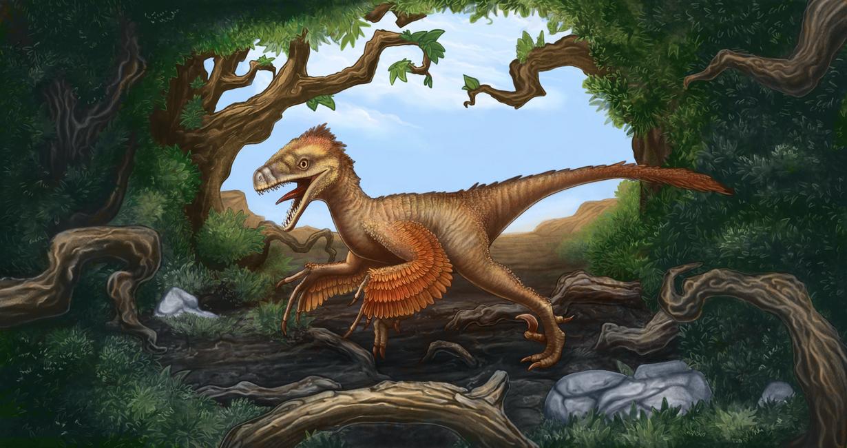 Bambyraptor by AshiRox
