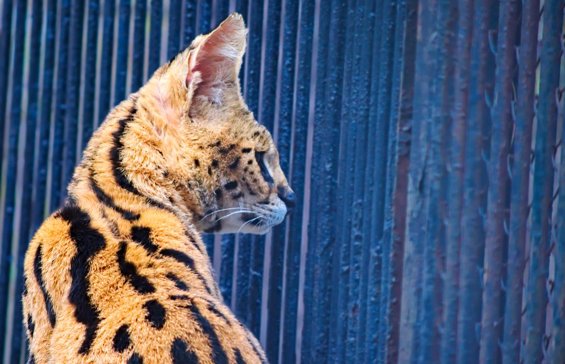 Cat by AshiRox