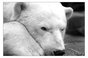 The Polar Bear by Free2Fall