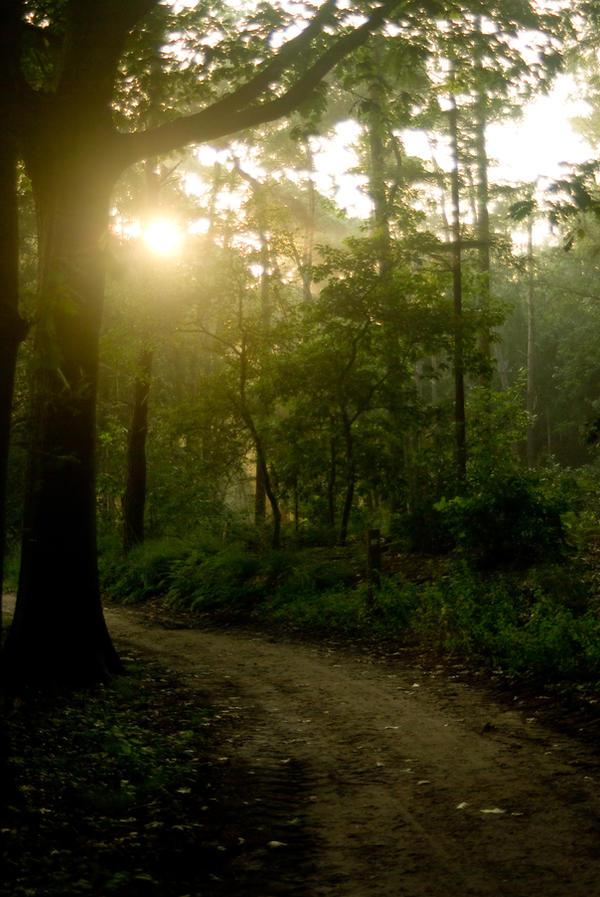 Woods at dawn 1
