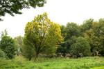 Little Yellow Tree 2