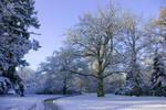 Path through Winter Wonderland