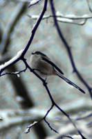 Winter wonder little bird by steppeland
