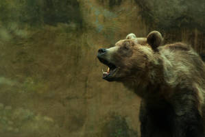 The call of the brown bear by steppeland