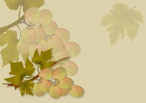 White Grapes background-design stock