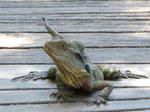 Water Dragon Frontal Stock