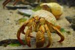Hermit Crab Stock by jojo22