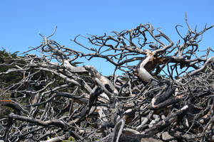 Gnarled Dead Trees Stock1