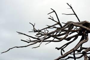 Dead Branches Stock by jojo22