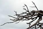 Dead Branches Stock