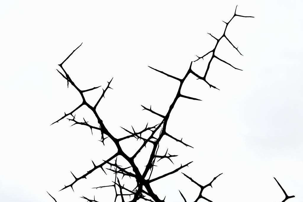 Thorns Stock by jojo22
