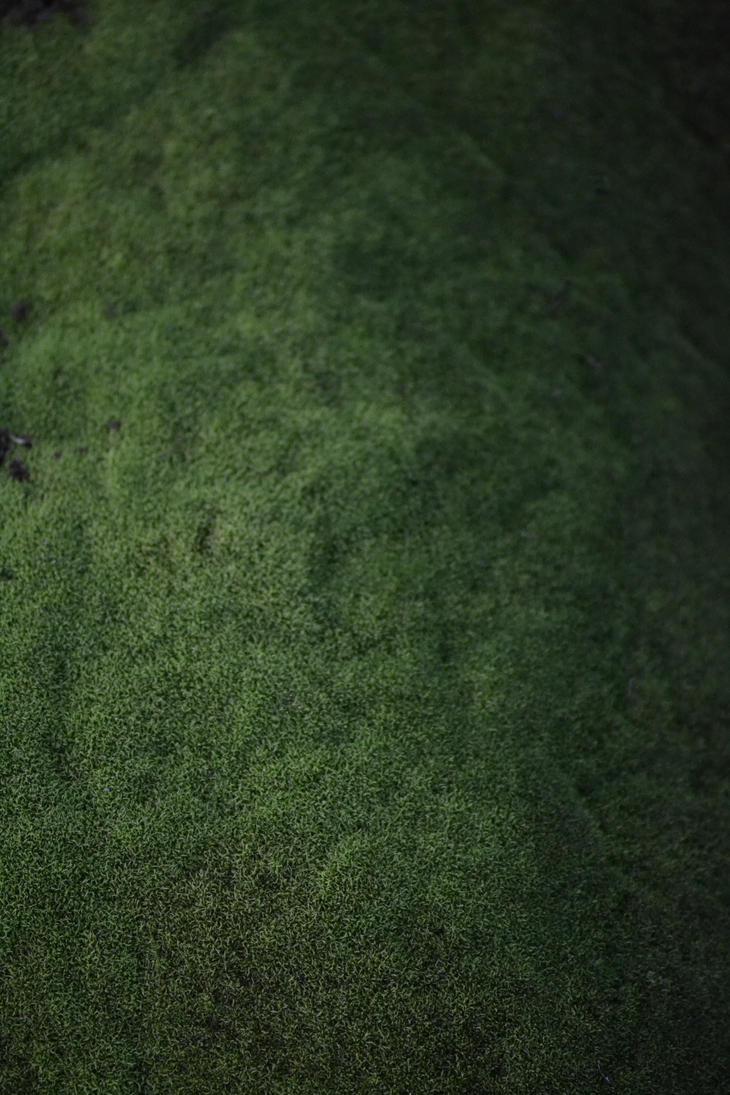 Dark Green Moss Texture Stock by jojo22 on DeviantArt