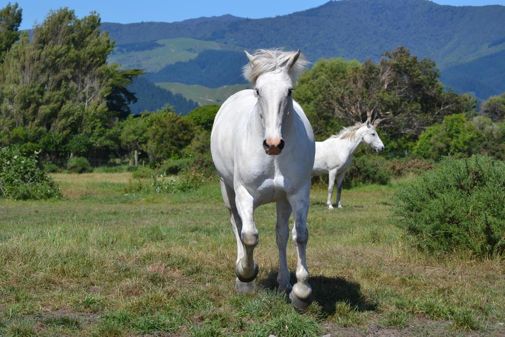 White running horses - photo#21
