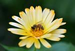 Busy Bee by jojo22