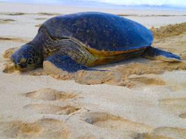 Turtle Bay by hamdiggy