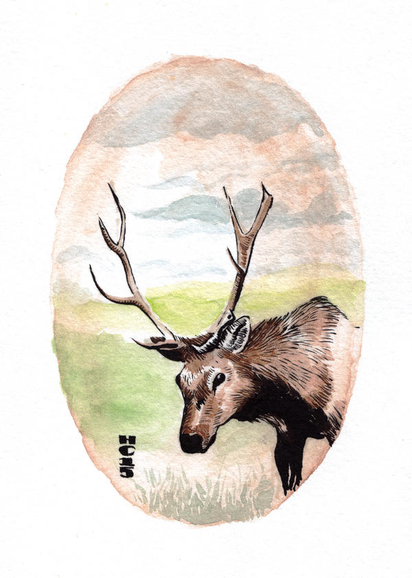 Watercolor Elk by hamdiggy