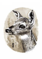 Watercolor Deer 02 by hamdiggy