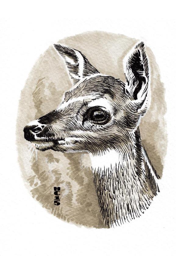 Watercolor Deer 02