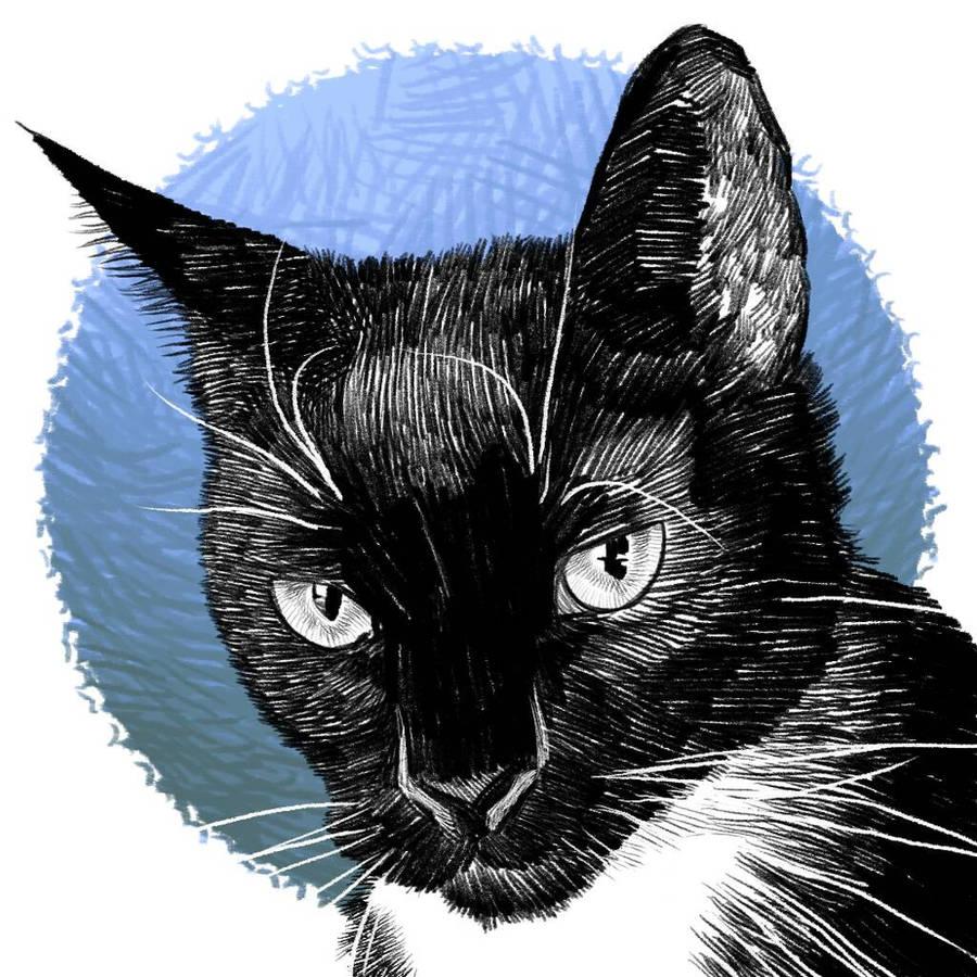 black cat by hamdiggy