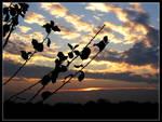 minnesota sunrise 14