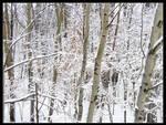 Minnesota Snow 02