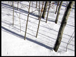 Minnesota Snow 04