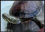 turtles 03