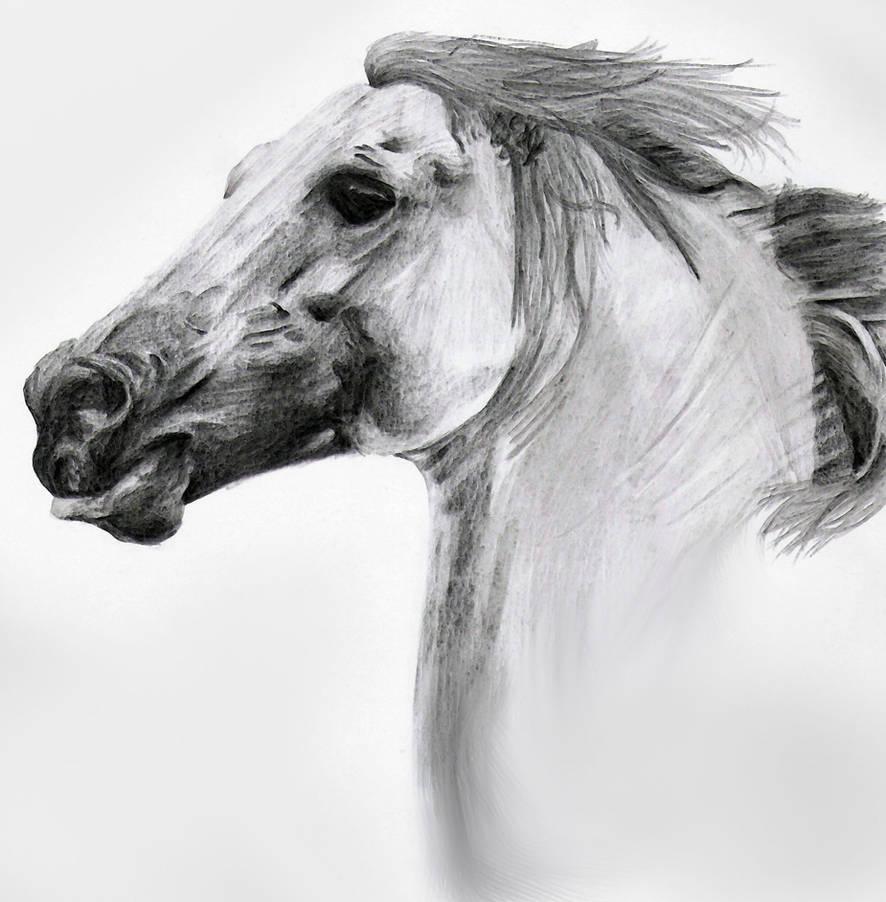 Horse pencil sketch by doublevixen