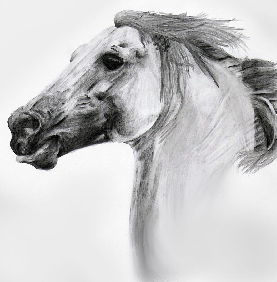 Horse- Pencil Sketch by DoubleVixen on DeviantArt