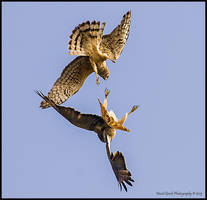 Duel 3 by AirshowDave